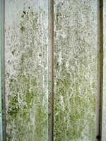 Fuktig vær gir gode vektstbetingelser for alger og svertesopp på fasaden.