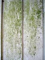 Grønske oppstår på kledning der den tørker sent etter regnvær.