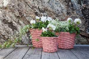 <b>BLOMSTERKURV:</b> Fjern støv og skitt og gi gamle blomsterkurver nytt liv. Med farger som kler blomstene blir det en fin detalj i hagen.