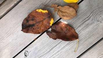 behandle på høsten