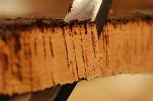 Først ved tredje høsting, når treet er minst 43 år gammelt, er barken blitt av så fin og jevn kvalitet at den kan brukes til vinkorker. Før det brukes den blant annet til gulv.