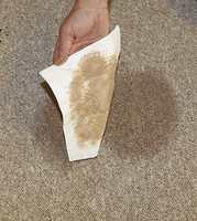 Ta opp så mye som mulig av sølet så fort som mulig ved hjelp av litt tørkerull eller en serviett.