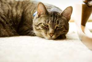 Dyrene liker også tepper. Dette er fra Danfloor.