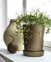 Ved hjelp av Decor Metall får den enkle krukken et elegant og eksklusivt uttrykk når den reflekterer dagslyset som kommer inn gjennom vinduet. Krukken er malt med Decor Metall i fargen Brons 11.