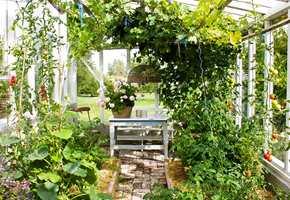 <b>DRIVHUS:</b> I Halvors hage står det også et drivhus – akkurat slik mange nå drømmer om og stadig flere realiserer.