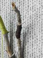 <br/><a href='https://www.ifi.no//alle-vil-ha-strikketapet'>Klikk her for å åpne artikkelen: Alle vil ha strikketapet!</a>