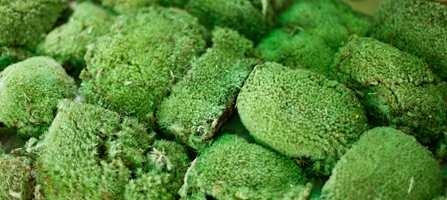 <br/><a href='https://www.ifi.no//arets-farge-er-gronn'>Klikk her for å åpne artikkelen: Årets farge er grønn</a>
