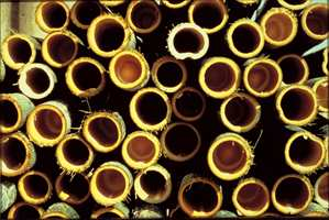 Bambus er gress, men hardere enn mange tresorter.