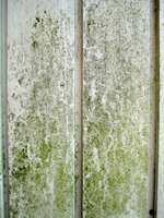 Vask huset hvert år, så slipper du at sopp og alger skader veggene.