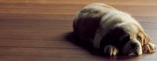 Med pleieprodukter blir gulvet penere og tåler mer.