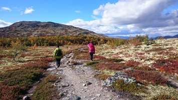 <b>NATUR: </b>Høsten byr på flotte farger og stemninger på fjellet, i skogen eller ved sjøen. La deg inspirere av t stedet som gir deg hvile og ro.