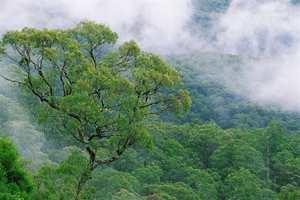 Det er mange alternativer til regnskogstømmer