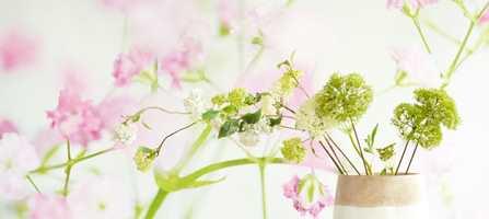 <br/><a href='https://www.ifi.no//omgi-deg-med-sommerlige-blomster'>Klikk her for å åpne artikkelen: Omgi deg med sommerlige blomster</a>