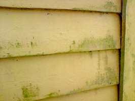 Grønske opptrer fortrinnsvis på vegger som ikke varmes opp av solen, som på nordsiden av huset eller på felter skjermet av busker og trær. Grønske magasinerer fukt og kan på sikt føre til skader.