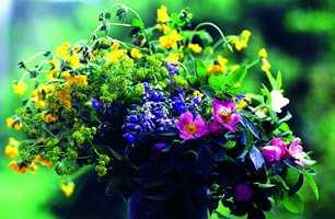 Nyanselike farger rundt oss: Gult, grønt, rødt og blått: en fargesterk og harmonisk bukett. Naturen velger riktige nyanser – helt naturlig.
