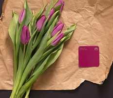 <b>TULIPANER:</b> La deg inspirere av tulipaner og ta det friske og knasende med som inspirasjon når du velger farger.
