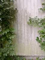 <b>BEGROING:</b> Busker og trær som vokser tett inntil fasaden forhindrer at kledningen tørker ut etter et regnskyll. Klipp ned grenene, eller flytt på buskene for å redusere begroingen på fasaden.