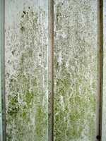 Milde vintre og fuktig vær gir gode vekstbetingelser for alger og annen begroing på fasaden.
