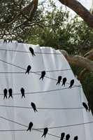 Disse fuglene fra Vallila kan få lov til å flytte innendørs.