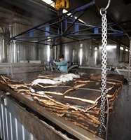 Den rundaktige bark blir kokt i spesialbeholdere og presset til en flat form for lettere å kunne stanse ut flaskekork.