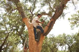 Barken blir strippet av korkeika i sommermånedene for å bli til flaskekork eller gulvbelegg.