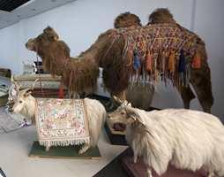 Eksklusiv ull som gir fete og lange fibre.