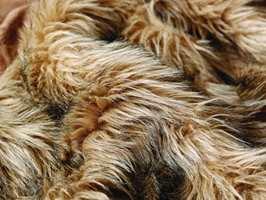 Lær, treverk, kobber pels og gevirer fra hjorter hører til stilen, liksom puter med innsektsmotiver hører til trendbildet.