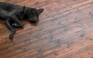 Nøttefarget beis gir et lekkert og eksotisk gulv. Hvor mørkt resultatet blir, reguleres med antall påføringer.