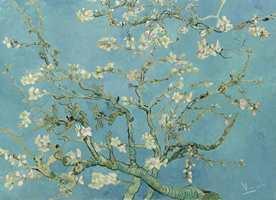 <b>MANDELTRE:</b> Van Goghs fasinasjon for japansk postkort-kunst gjenspeiler seg i mange av hans bilder. Slik som motivet av blomstrende mandeltre.