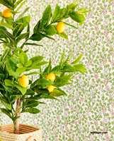 <b>FRODIG:</b> Hva skriker vel mer vår enn en frodig grønn sitronplante foran et blomstrete tapet? Tapetet er fra Eijffinger sin kolleksjon Rice, som føres av Storeys.