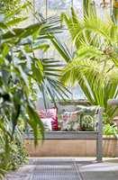 <b>SOMMERLIG:</b> Du kan skape din egen sommerlige oase med puter i friske farger og masse grønne planter. Disse putene er kledd i tekstiler fra Sanderson sin kolleksjon Glasshouse. Føres av Intag.