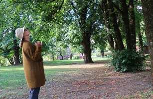 Hvis du oppdager en person som står med pannen mot et tre når du går i skogen, må du ikke bli urolig eller tilkalle hjelp. Det kan være en skogsbader du ser.