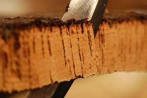 Bark fra korkeiken består til 60 prosent av luft, og hver kvadratcentimeter kork er bygd opp av 40 millioner små luftfylte celler.